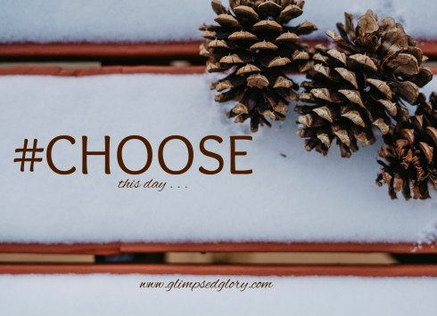 choose 74532_pinecones_in_snow